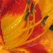 Flower Garden 10 Art Print