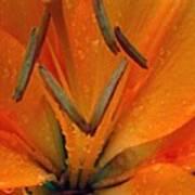 Flower Garden 24 Art Print