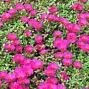 Flower Garden 38 Art Print