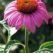 Flower Garden 48 Art Print
