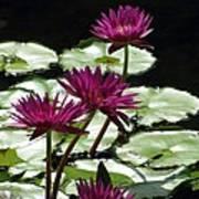Flower Garden 59 Art Print