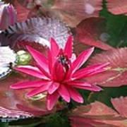 Flower Garden 67 Art Print