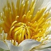Flower Garden 68 Art Print