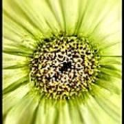 Flower Green Art Print