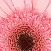 Flower - I Love Pink Art Print