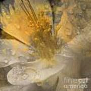 Flower IIi Art Print