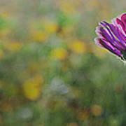 Flower In A Field  Art Print