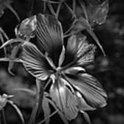 Flower In B-w Art Print