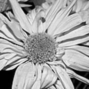 Flower In Black And White Art Print