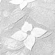 Flower In Pencil Art Print