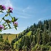 Flower In The Carpathians Art Print