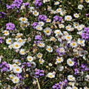 Flower Mix - Purple And White Art Print