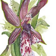 Flower Orchid 10 Elena Yakubovich Art Print by Elena Yakubovich