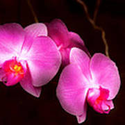 Flower - Orchid - Better In A Set Art Print