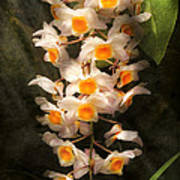 Flower - Orchid - Dendrobium Orchid Art Print