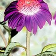 Flower Power 1357 Art Print