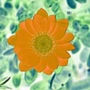 Flower Power 1433 Art Print