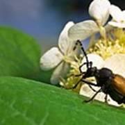 Flower Rise Over Beetle Art Print
