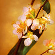 Flower - Sakura - A Touch Of Spring Art Print