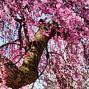 Flower - Sakura - Finally It's Spring Art Print by Mike Savad