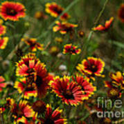 Texas Indian Blanket -  Luther Fine Art Art Print