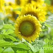 Flower - Texas Sunflower Field 1 - Luther Fine Art Art Print