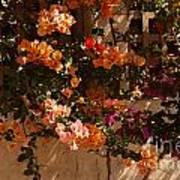 Flower Trellis In La Jolla Art Print