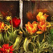 Flower - Tulip - Tulips In A Window Art Print