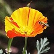 Flower With Honey Bee Art Print