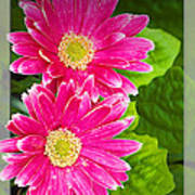 Flower1 Art Print