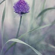Flowering Chive Art Print by Priska Wettstein