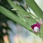 Flowering  Orchid Stem Art Print