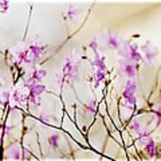 Flowering Rhododendron Art Print