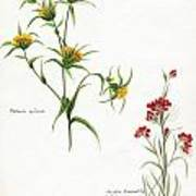 Flowers 1950 Art Print