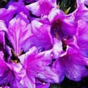 Flowers 2078 Acanthus Art Print