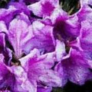 Flowers 2078 Lux Art Print