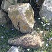 Flowers And Rocks Art Print