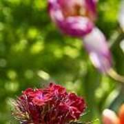 Flowers At Dallas Arboretum V14 Art Print