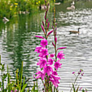 Flowers At The Lake Art Print