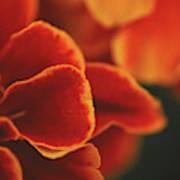 Flowers Blooming Art Print