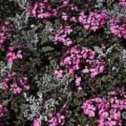 Flowers Dallas Arboretum V16 Art Print