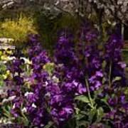 Flowers Dallas Arboretum V18 Art Print
