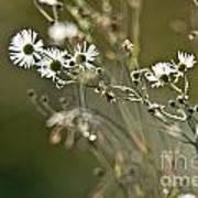 Flowers End Art Print