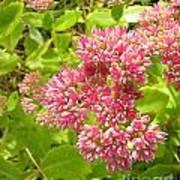 Flowers Garden Art Print