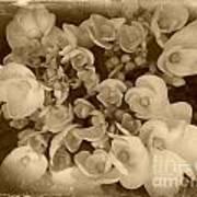Flowers In Sepia Art Print