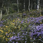 Flowers In The Aspen Forest Art Print
