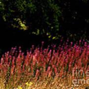 Flowers In The Breeze Art Print