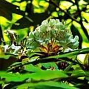 Flowers In The Woods Art Print