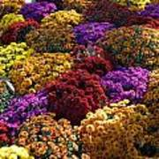 Flowers Near The Grand Palais Off Of Champ Elysees In Paris France   Art Print