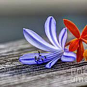 Flowers Of Blue And Orange Art Print